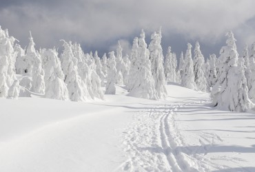 Trail Skiing on Mount Hood –  A Long Standing Tradition